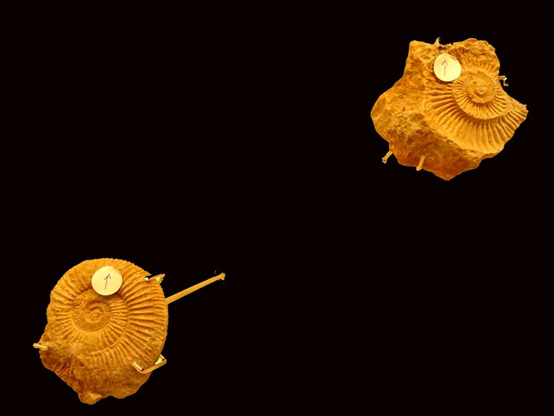 soportes metálicos horizontales para ammonites