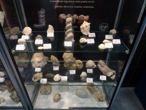 invertebrados fósiles