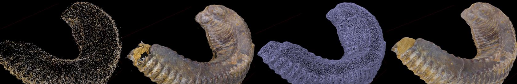 Fósiles 3D mediante técnicas de fotogrametría