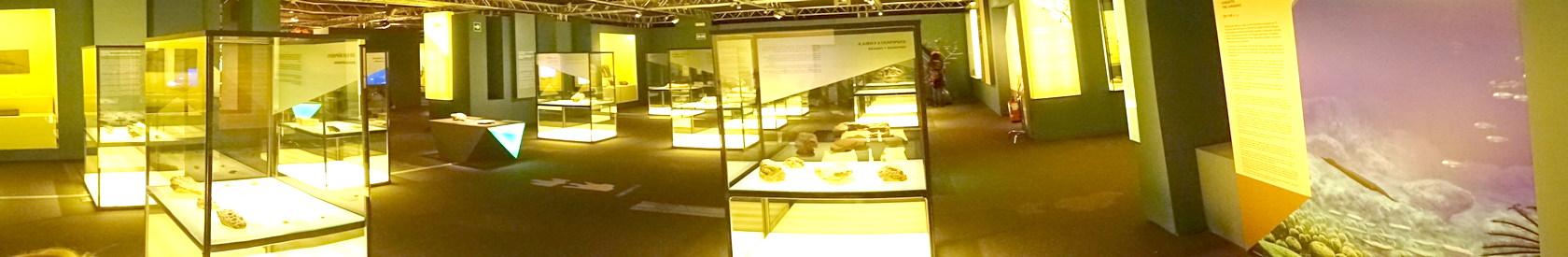 Exposiciones Paleontológicas