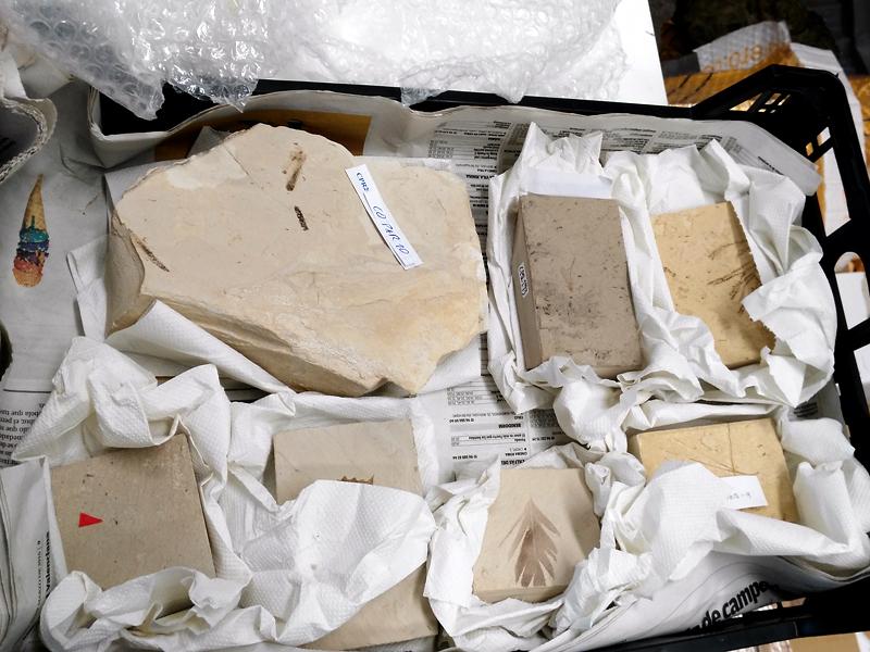 ejemplares recepcionados protegidos por papel