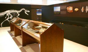 Sala expositiva de paleontología