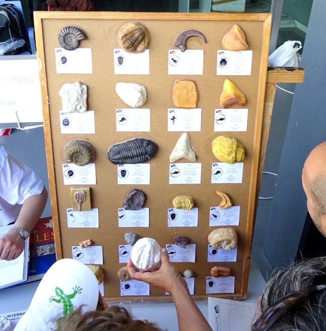 tablón de identificación de fósiles