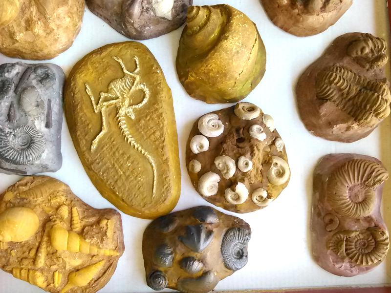 ejemplos de réplicas de fósiles pintadas de escayola