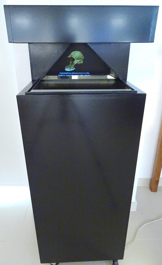 vitrina holográfica colección cráneos