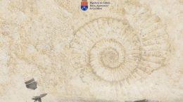 exposición dedicada al naturalista Daniel Jiménez de Cisneros organizada y patrocinada por el Ayuntamiento de Crevillent