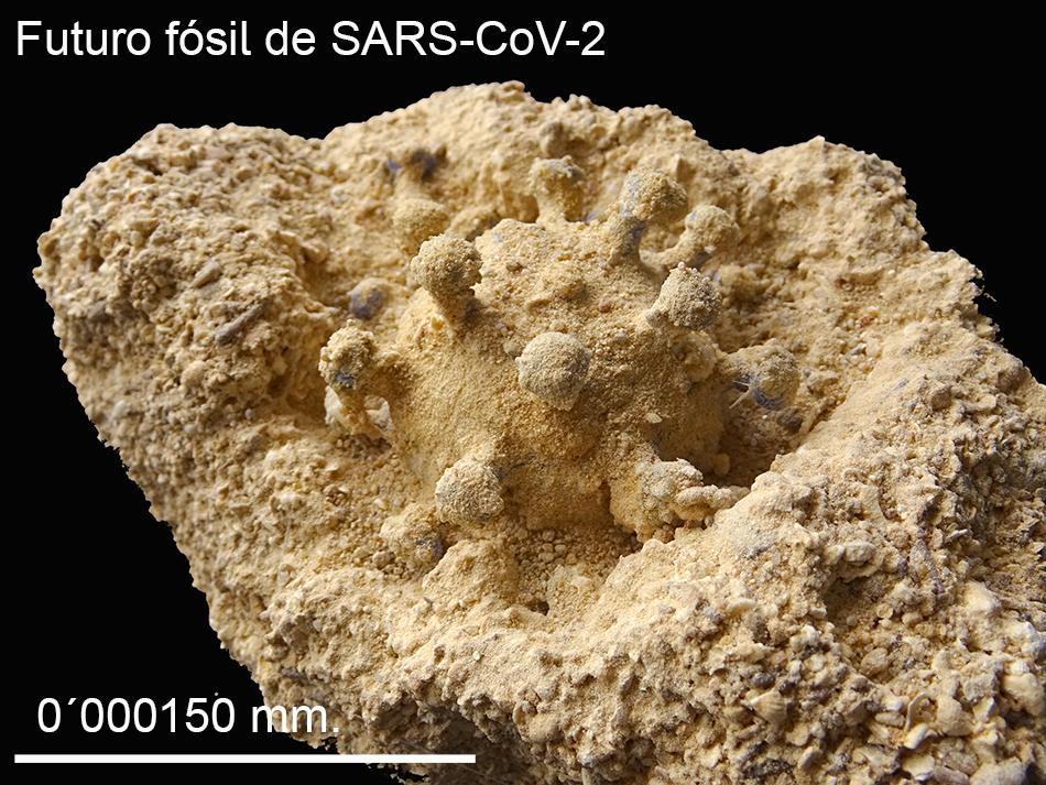 Recreación figurada del coronavirus Covid19 fosilizado. El virus aparece conservado en arena e incluido en una matriz también arenosa.